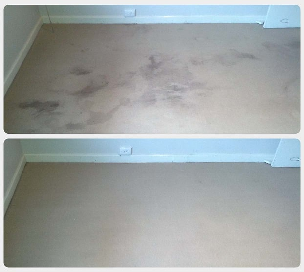 Carpet stain removal in Perth.